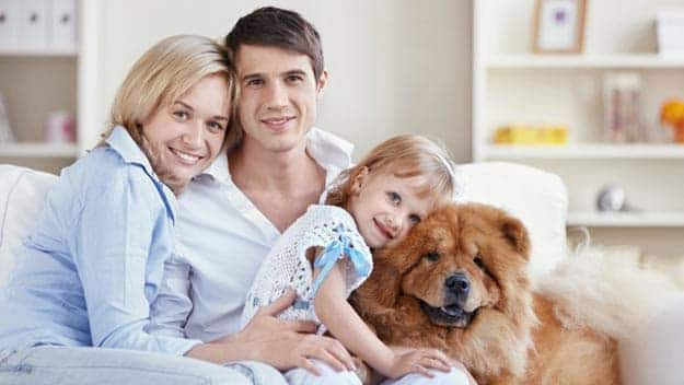 Wills & Trusts dog-young-family Direct Wills Bushey Mead